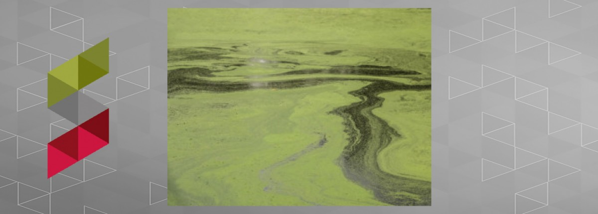 Algal blooms on Lake Erie