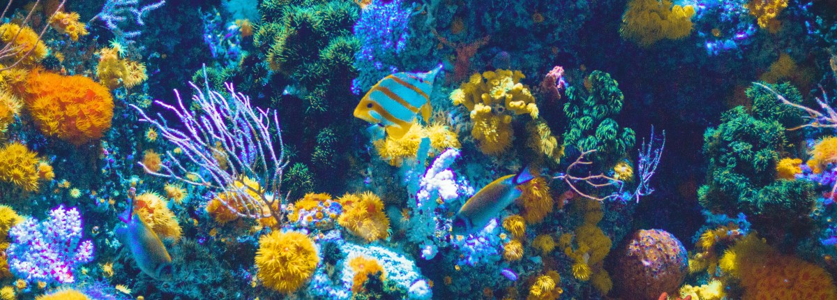 Panoramic view of a coral reef