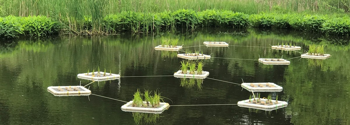 Floating islands at Milliron Research Wetlands at Ohio State Mansfield